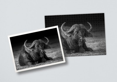 African buffalo | Puzzle 500 Teile