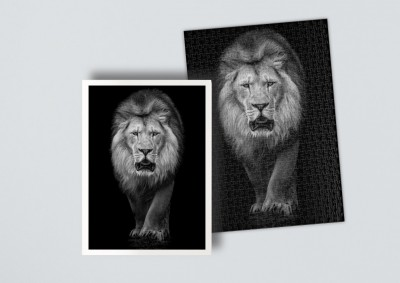 African Lion | Puzzle 500 Teile