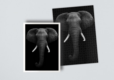 African Elephant isolated | Puzzle 500 Teile