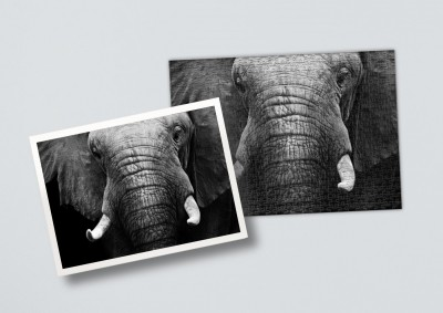 African elephant | Puzzle 500 Teile